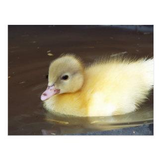 Little Duck Postcard