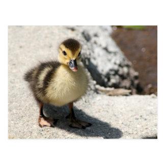 Little Duckling Postcard