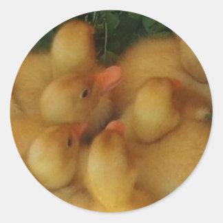 Little ducks stickers