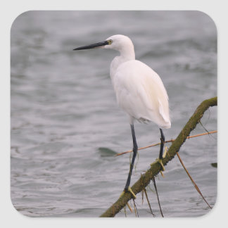 Little egret perched square sticker