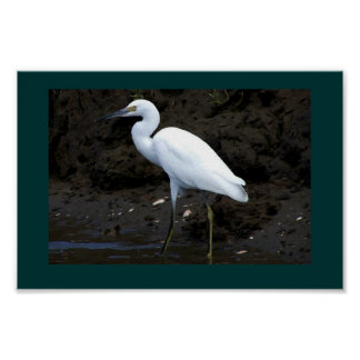 Little Egret Print