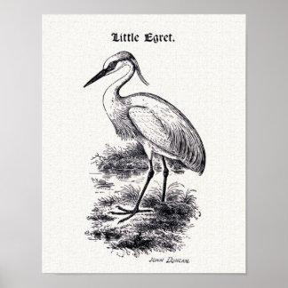 Little Egret Vintage Bird Illustration Poster