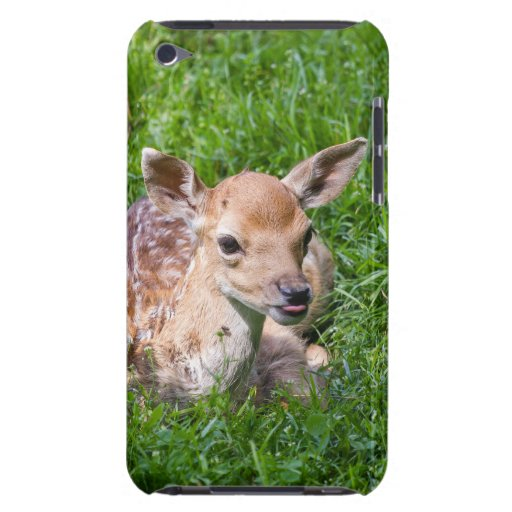 Little Fawn In Grass, Baby Animal iPod Case-Mate Cases