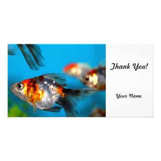 Little Fish Photo Cards