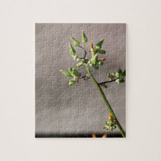 Little Flower Buds Jigsaw Puzzle