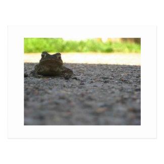 Little Froggy Postcard