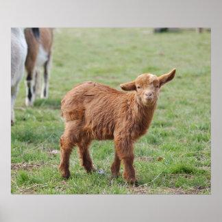 Little Goat ~ kids ~ small goat Poster