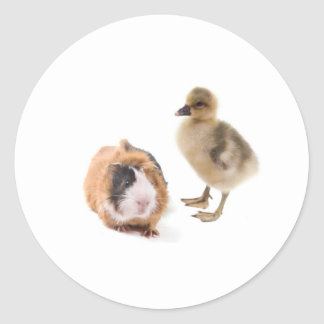 little goose and guinea pig round sticker