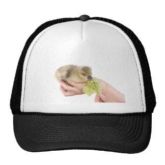 little goose eats cap