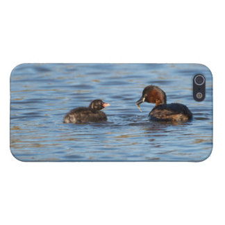 Little Grebe and Chick iPhone 5/5S Case