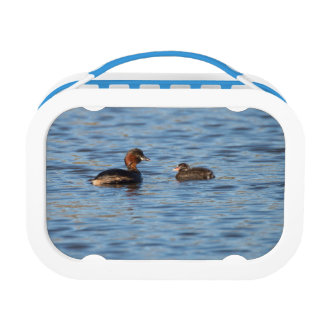 Little Grebe and Chick Lunch Box