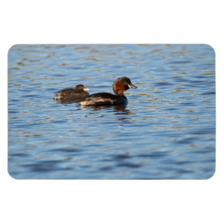 Little Grebe and Chick Magnet