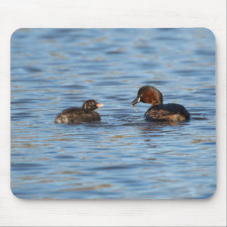 Little Grebe and Chick Mouse Pad