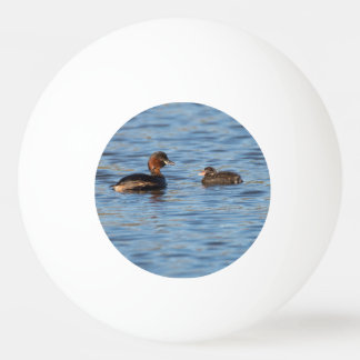 Little Grebe and Chick Ping Pong Ball