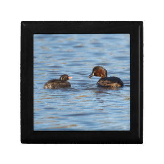 Little Grebe and Chick Small Square Gift Box