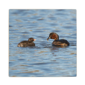Little Grebe and Chick Wood Coaster