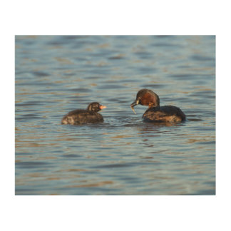 Little Grebe and Chick Wood Wall Art