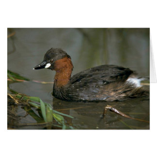 Little Grebe Card