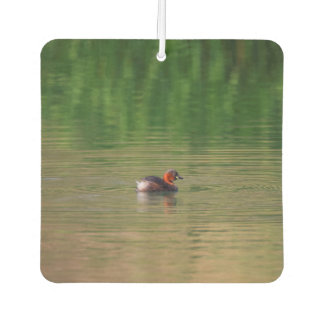 Little grebe duck in breeding plumage