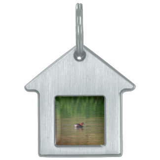 Little grebe duck in breeding plumage pet tag