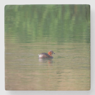 Little grebe duck in breeding plumage stone beverage coaster