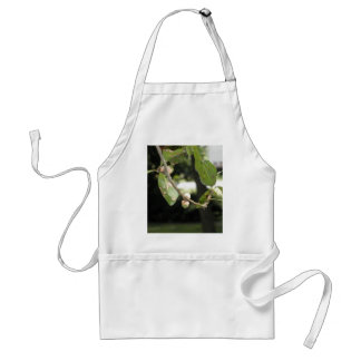 Little Green Acorn Standard Apron