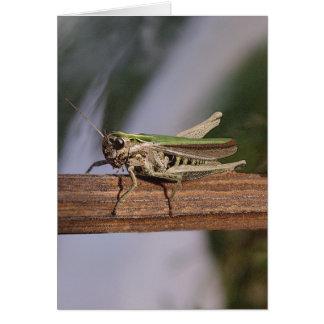 Little Green Grasshopper Christmas Birthday Greeting Card