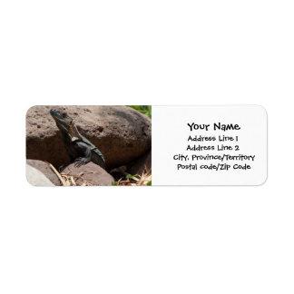 Little Iguana on the Rocks Return Address Label