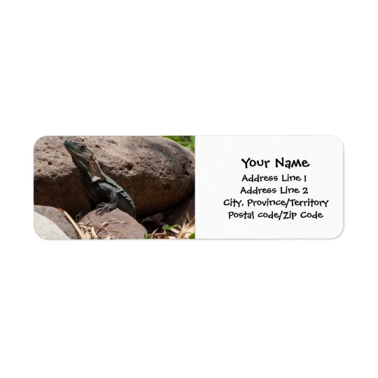Little Iguana on the Rocks Return Address Label