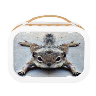 Little Joey Ground Lunch Box