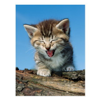 Little Kitten in a Tree Postcard