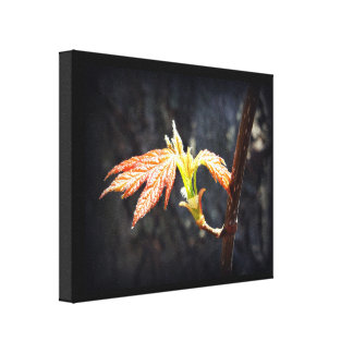 Little Leaves Gallery Wrapped Canvas