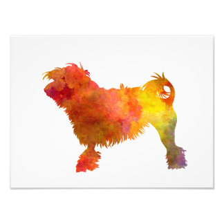 Little Lion Dog in Watercolor Photo Print