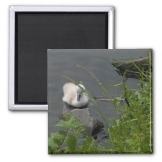 little lost swan square magnet