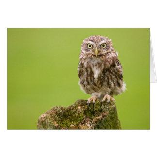 Little Owl Card by cARTerART