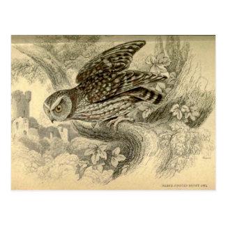 Little Owl:  Vintage Jardine's illustration card