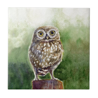 Little owl watercolor painting tile