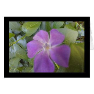Little Purple Bloom- Song of Sol. 8:7 Greet. Card