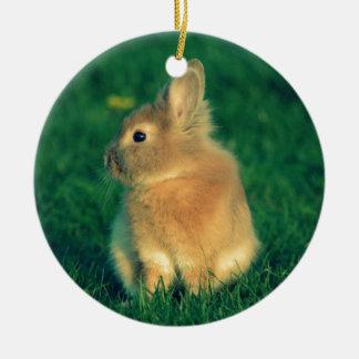 Little rabbit ornament