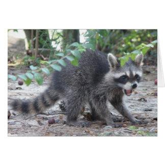Little Raccoon Card