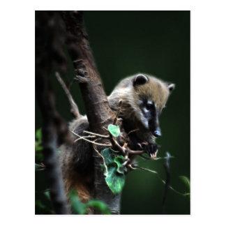 Little rascals coati - lemur postcard
