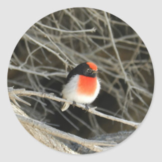 little robin redbreast bird sitting on a twig classic round sticker