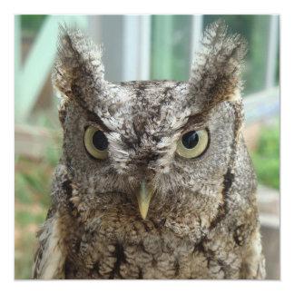 """Little Screech Owl / Bujo pequeño 5.25"""" Square Invitation Card"""