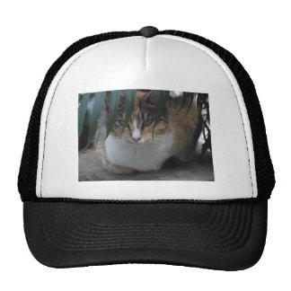 Little Sister Hat