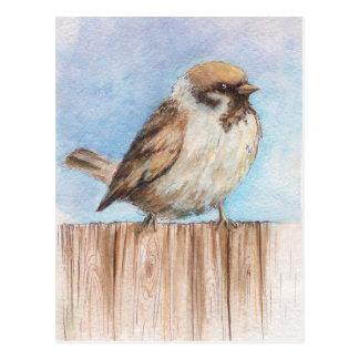Little sparrow postcard
