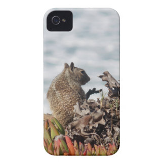 Little squirrel iPhone 4 case