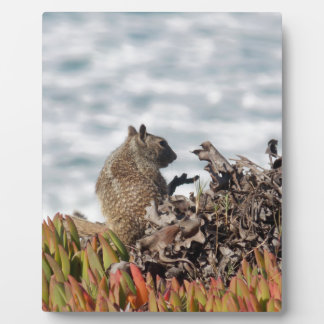 Little squirrel plaque