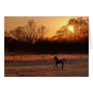 Little Stallion At Sunset Card
