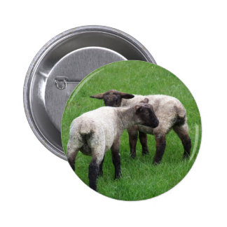Little Twin Lambs 6 Cm Round Badge