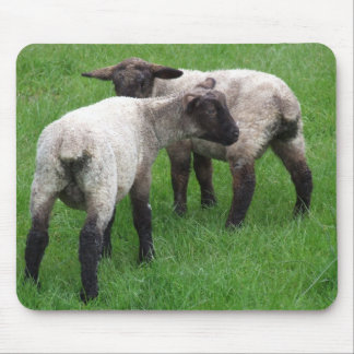 Little Twin Lambs Mouse Pad